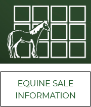 Equine Sale Infromation